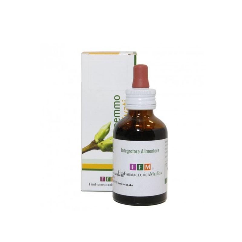 betula verrucosa