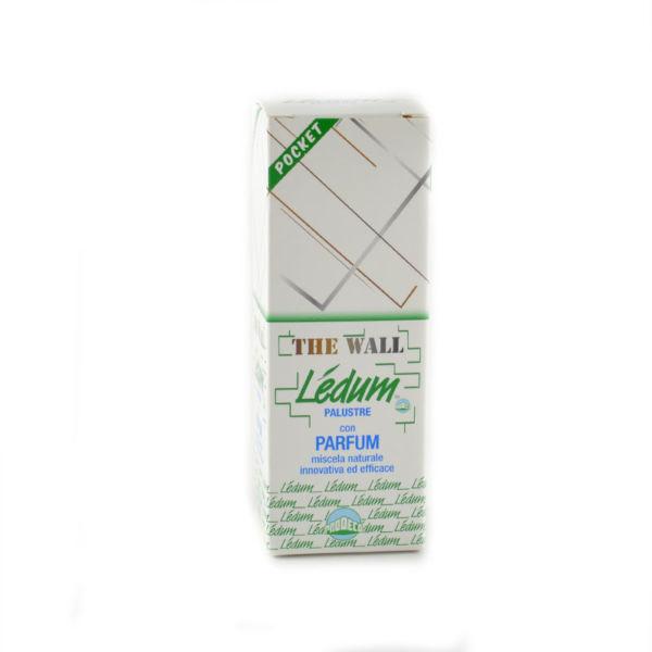 sedum the wall pocket
